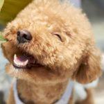 犬を飼うということの『覚悟』『心構え』愛犬家15名の深い生声!